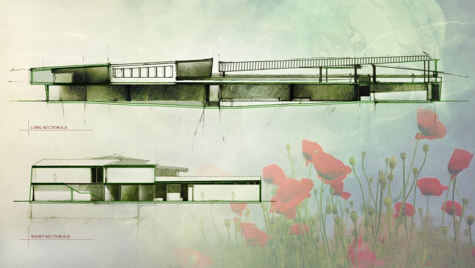 Papaver- National Wildflower Centre