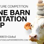 Stone Barn Meditation Camp architecture competition by Bee Breeders